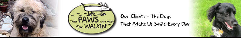 Our Clients - the Dogs that make us smile everyday at These Paws were made for Walkin' LLC