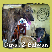 Denali & Batman