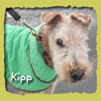 Kipp (in memory of our dear friend)