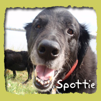 Spottie (in memory of our dear friend Molly)